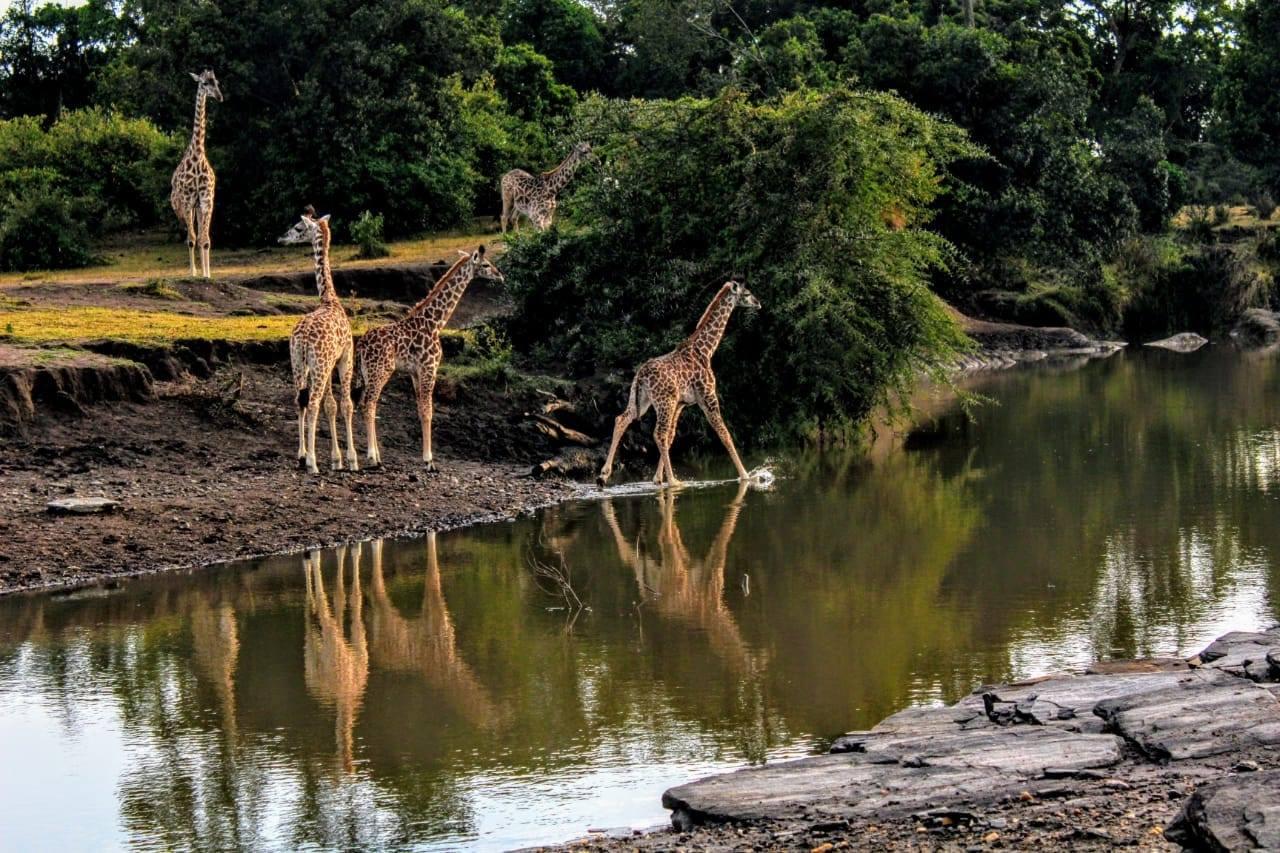 safari_c4.jpg