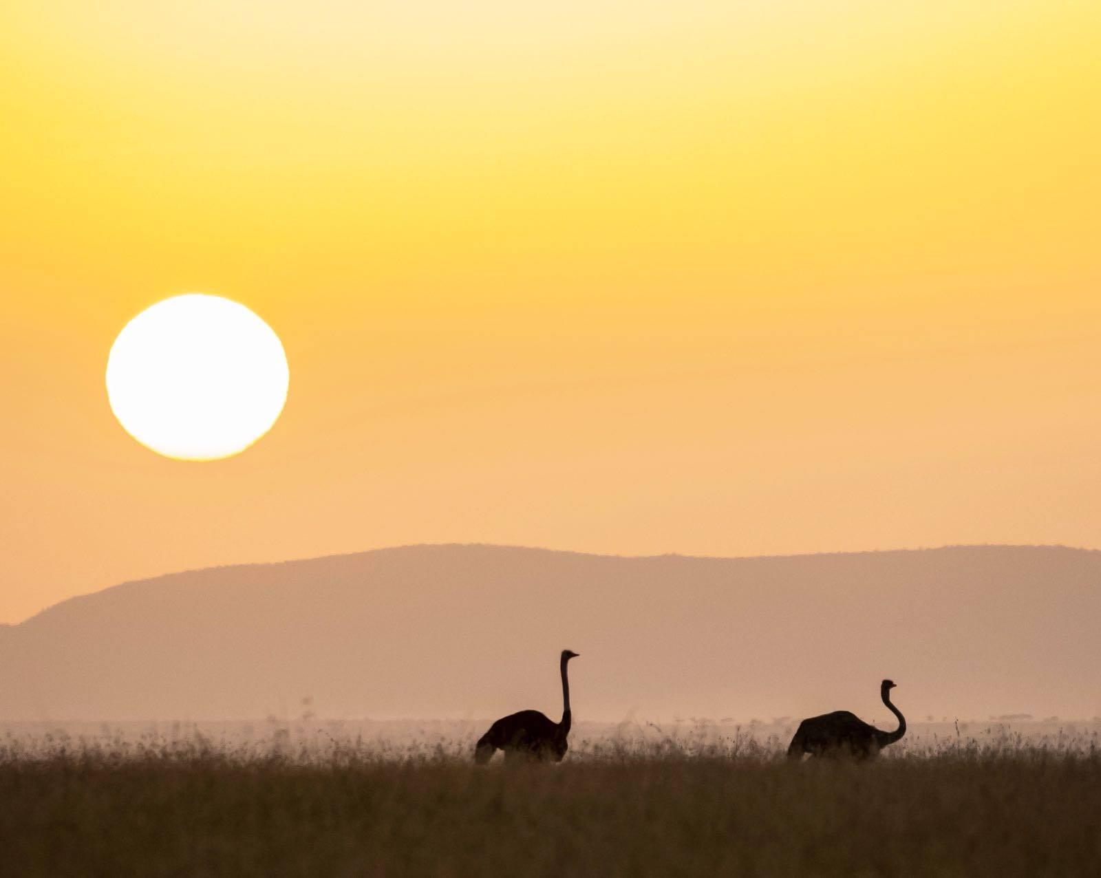 safarib7.jpg