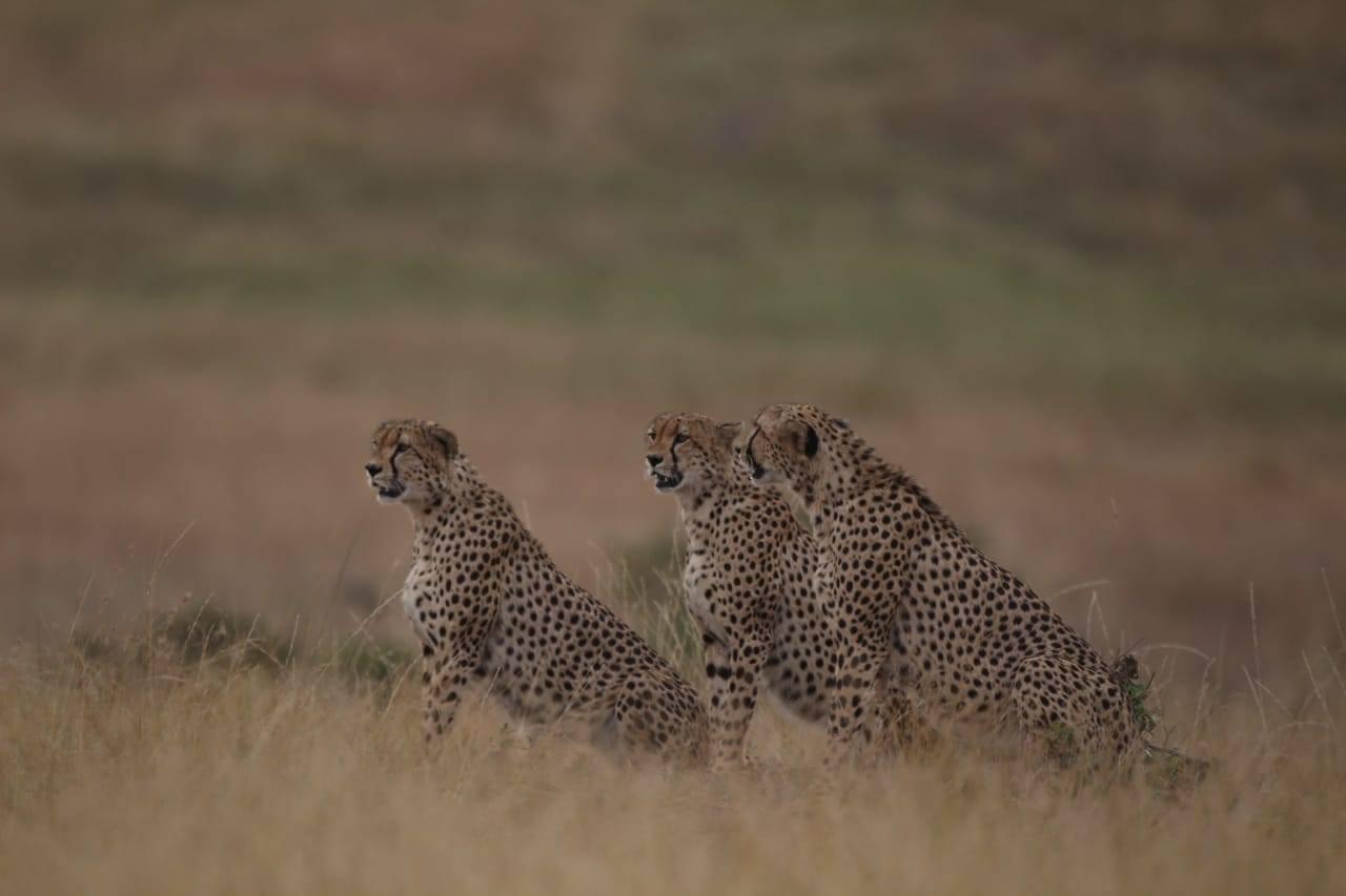 safarib5.jpg