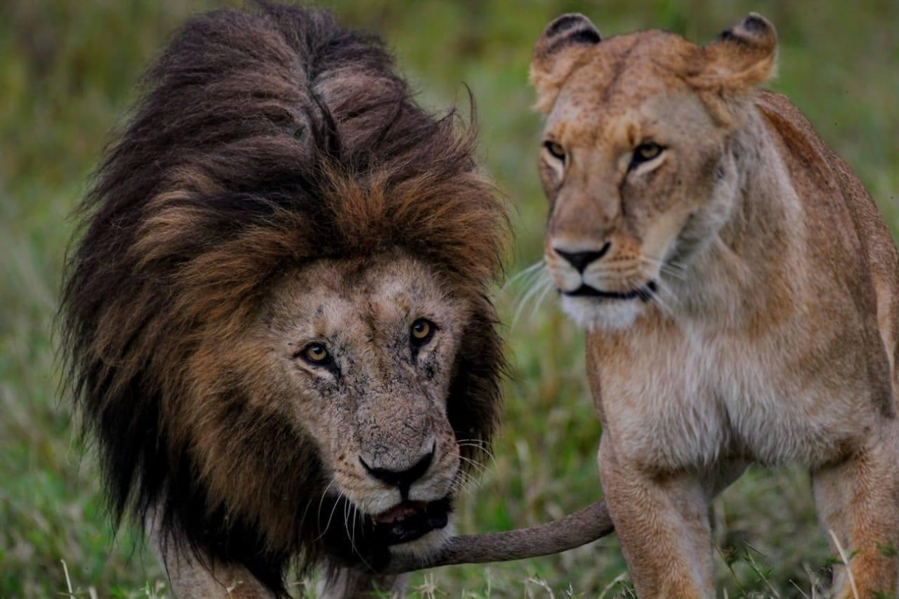 safaria3.jpg