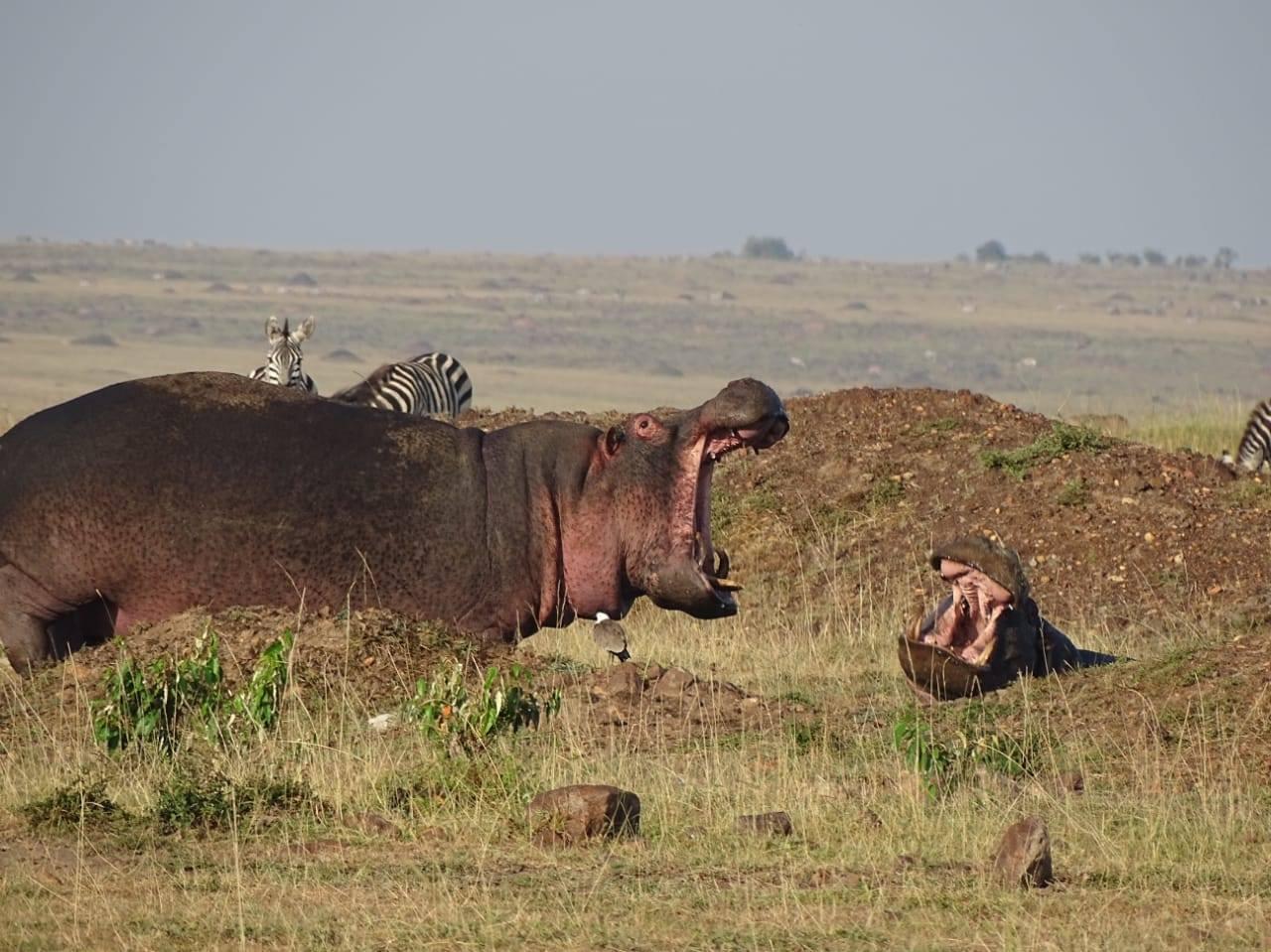 safaria2.jpg