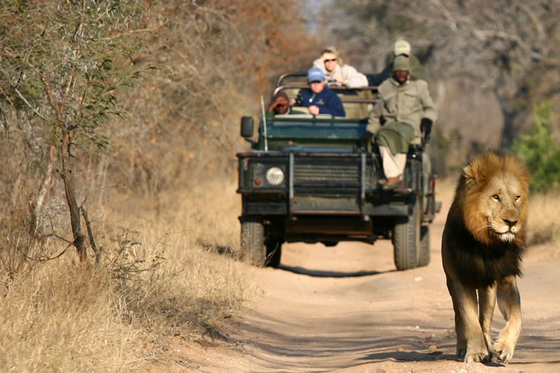 11 Day south africa HIGHLIGHTS - • Welgevonden Private Game Reserve • Cape Town tours and scenery11 Days / 10 Nights