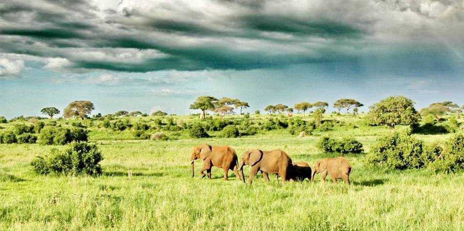 8 DAY TANZANIA HIGHLIGHTS - • Tarangire National Park • Lake Manyara National Park• Central Serengeti • Northern Serengeti8 DAYS / 7 NIGHTS