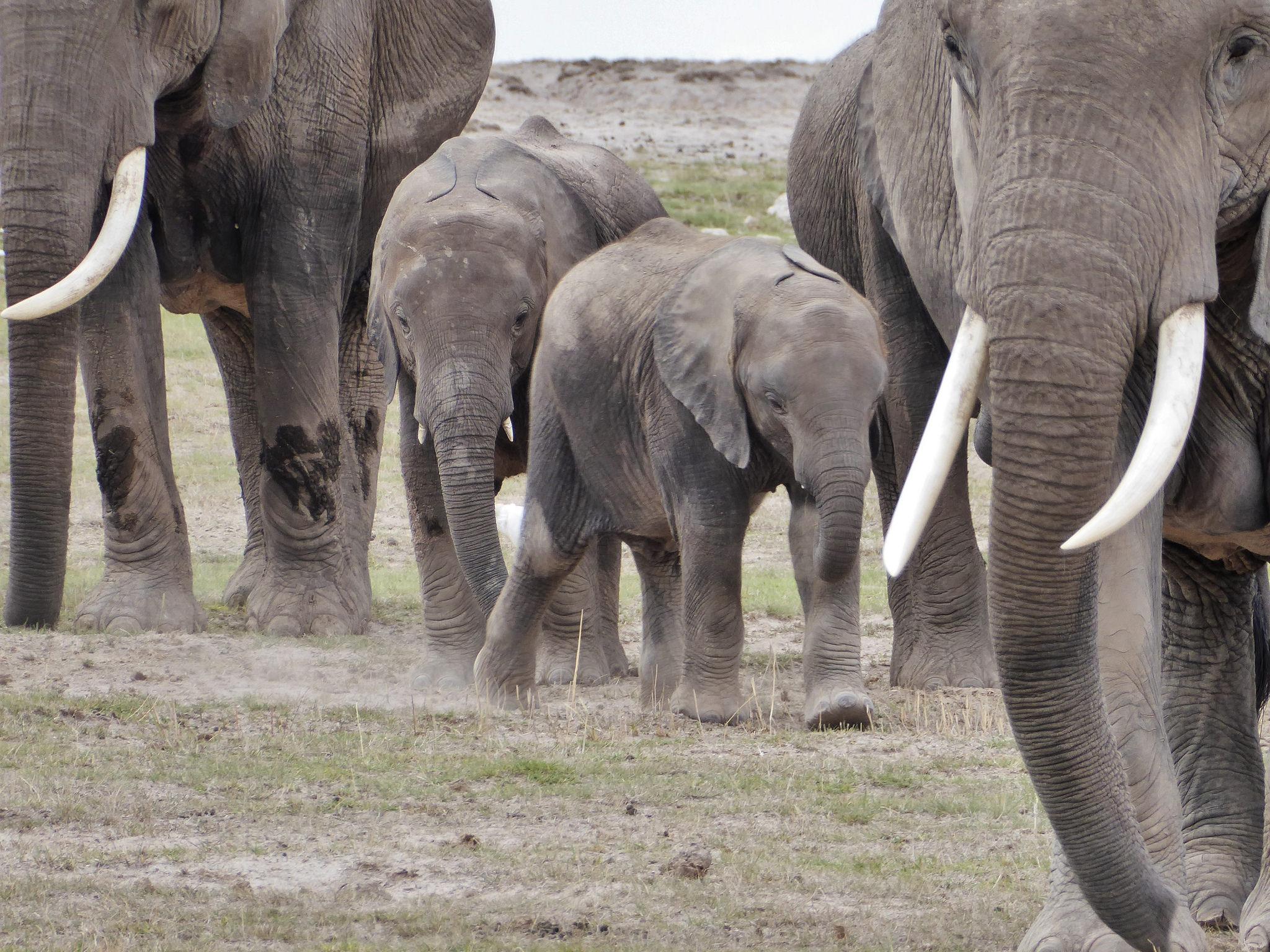Amboseli3a.jpg