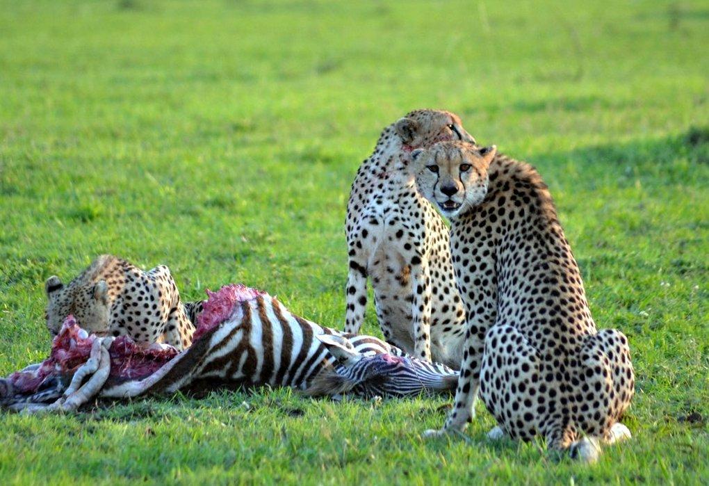 Amboseli8a.jpg