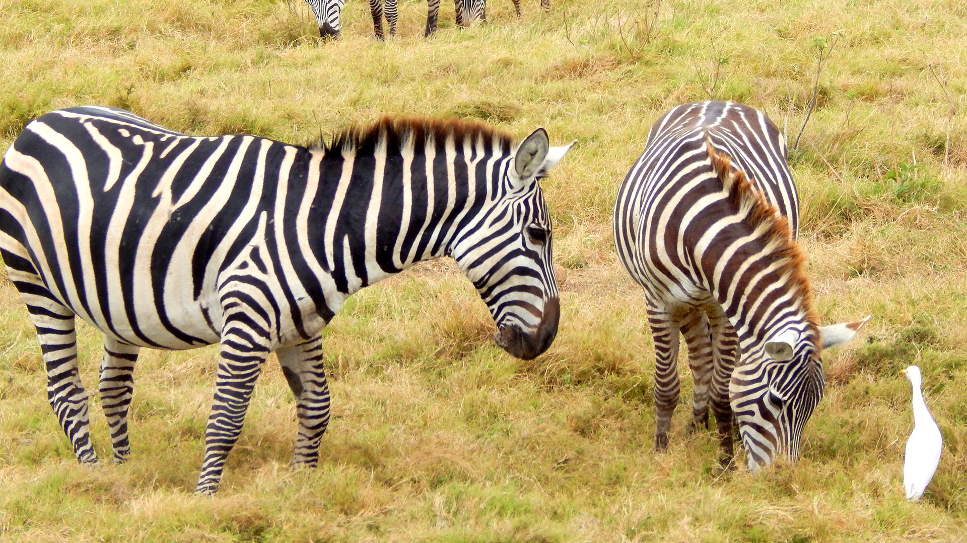 Amboseli18a.jpg