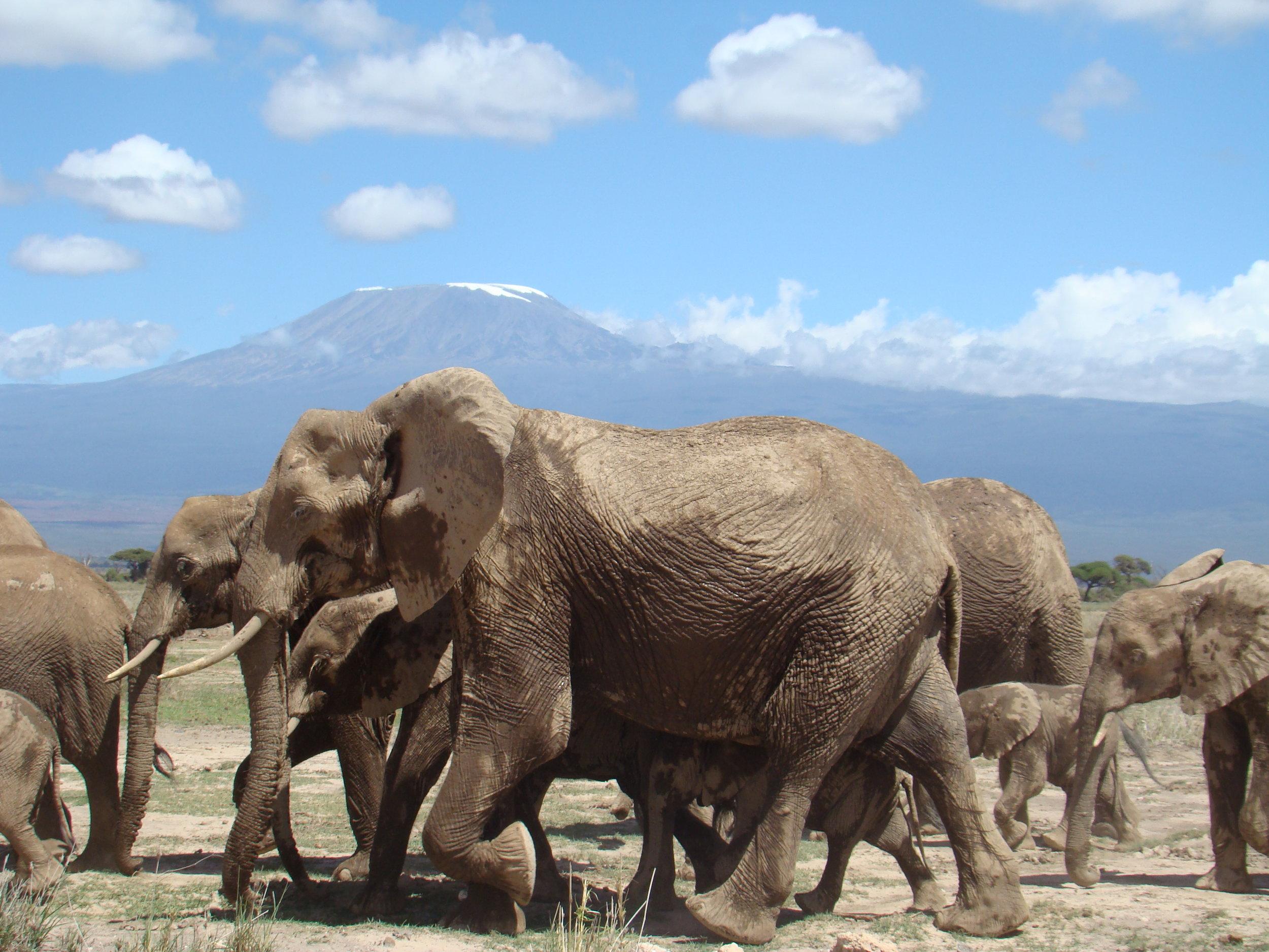 Amboseli1a.jpg