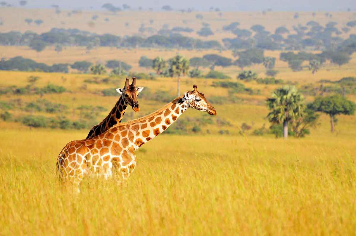 LAKE MBURO NATIONAL PARK - Lake Mburo National Park contains an extensive area of wetland and harbors several species of mammals not found anywhere else in Uganda.