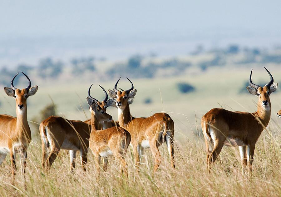 Kenya6.jpg