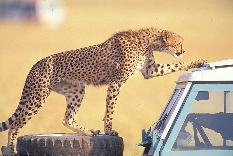 Kenya4.jpg