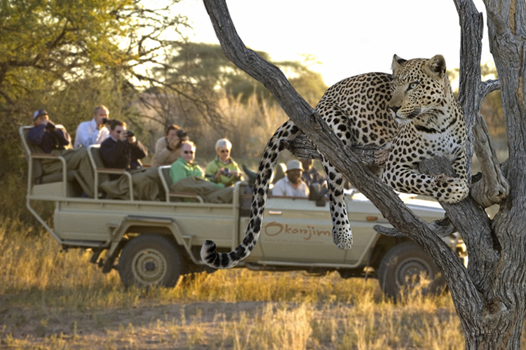 DAY 7: OKONJIMA WILDLIFE SANCTUARY - The AfriCat Foundation is based here and is devoted to the conservation of predators, specifically cheetah and leopard with the aim to ease the conflict that arises between humans and carnivores.
