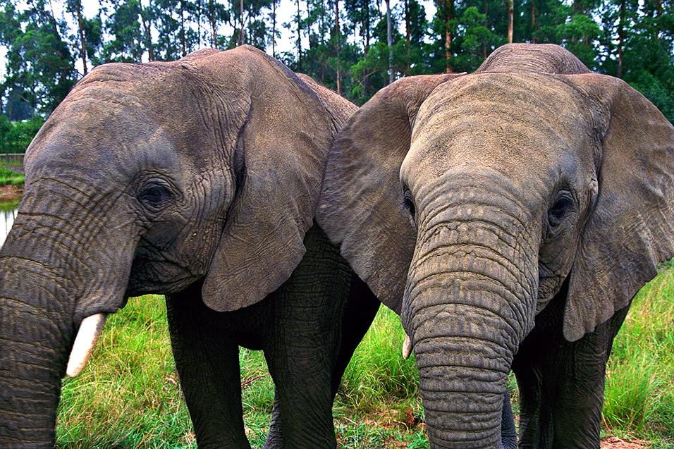 Knysna Elephants20.jpg