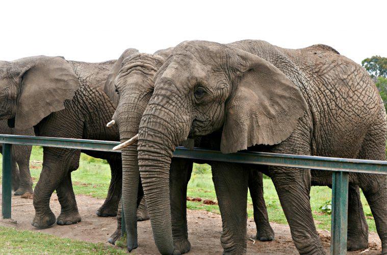 Knysna Elephants10.jpg