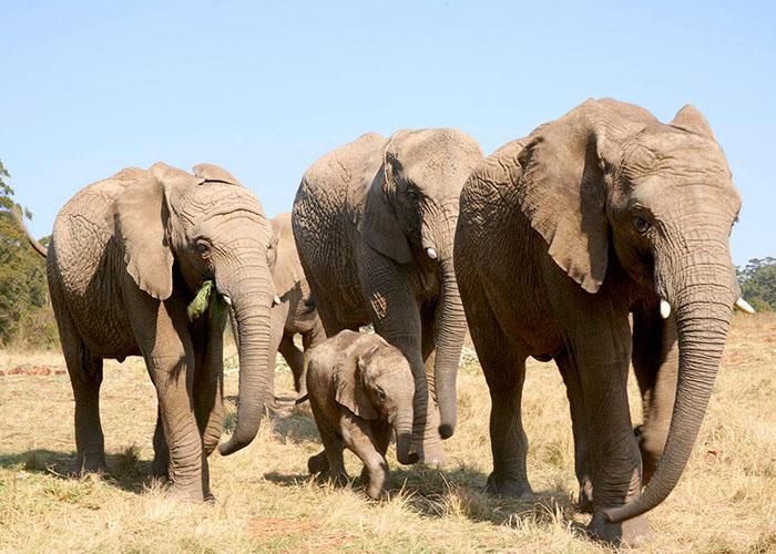 Knysna Elephants9.jpg