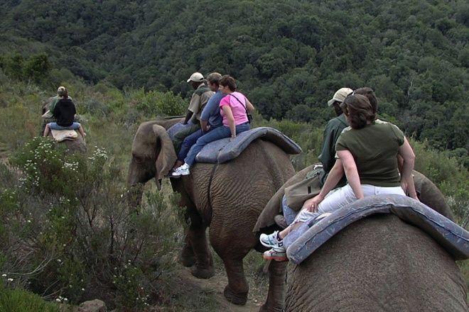 Knysna Elephants8.jpg