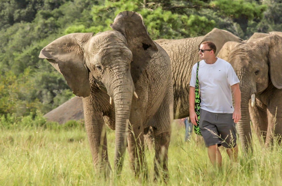 Knysna Elephants5.jpg