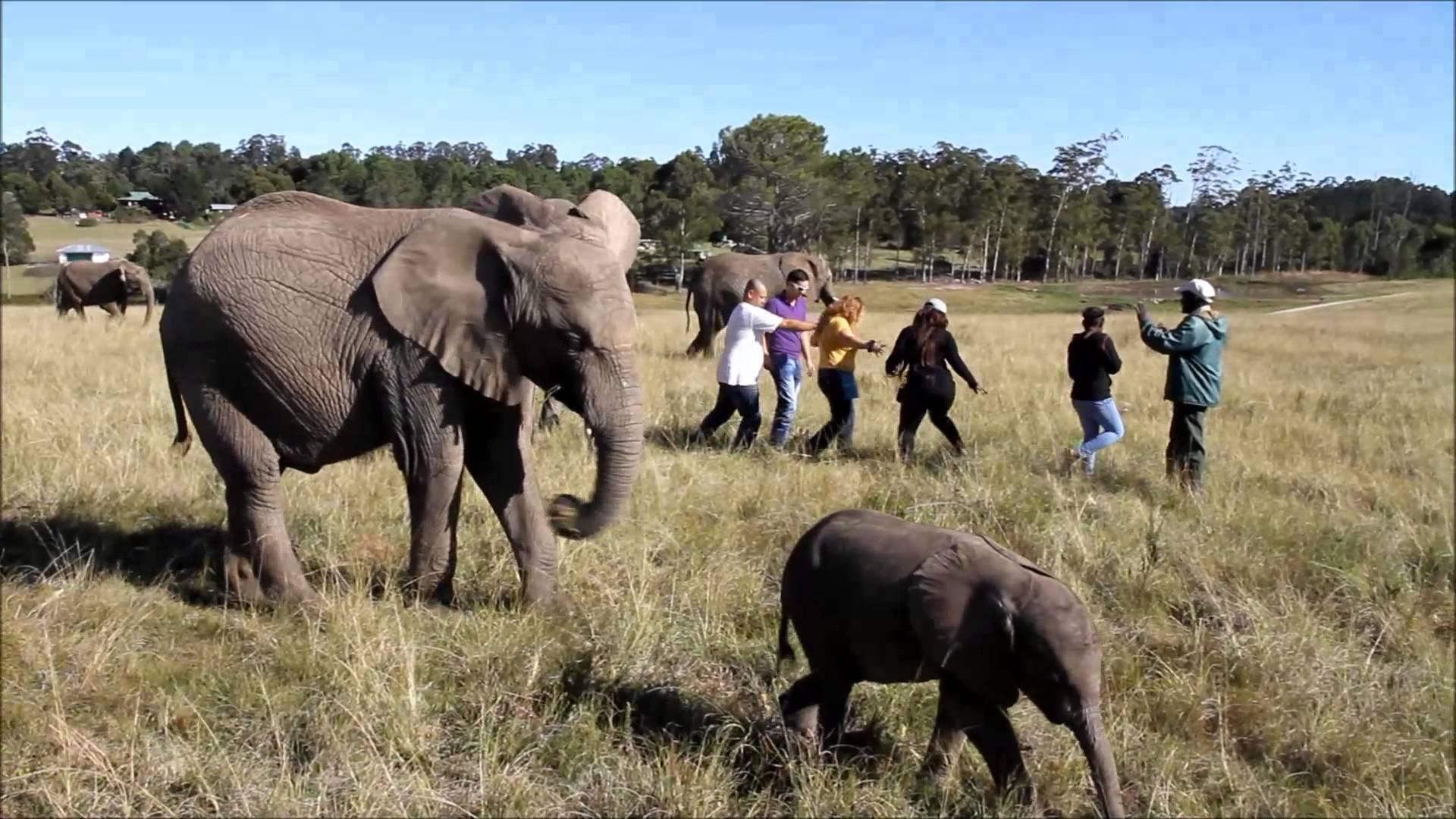 Knysna Elephants3.jpg