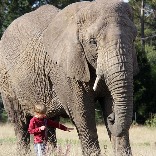 Knysna Elephants2.jpg