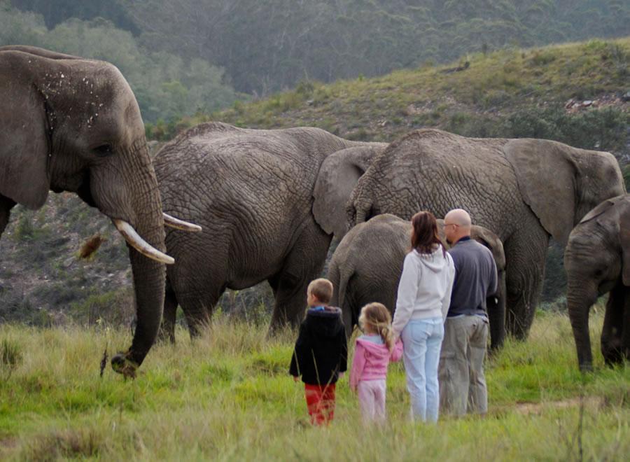 Knysna Elephants1.jpg