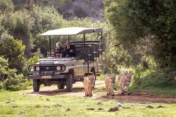 Day 3 & 4: BOTELIERSKOP GAME RESERVE - Spend the day at BoteliersKop Game reserve! Situated on a 10,000 acre game reserve located between Mossel Bay and George, and set in amongst spectacular mountain ranges. A real Garden Route Safari experience!