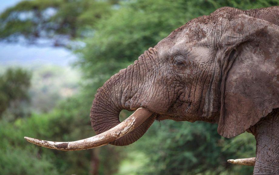 Amboseli9.jpg