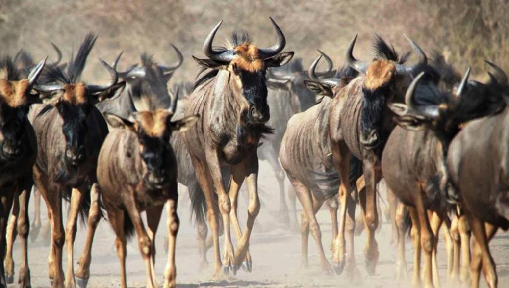 Amboseli30.jpg