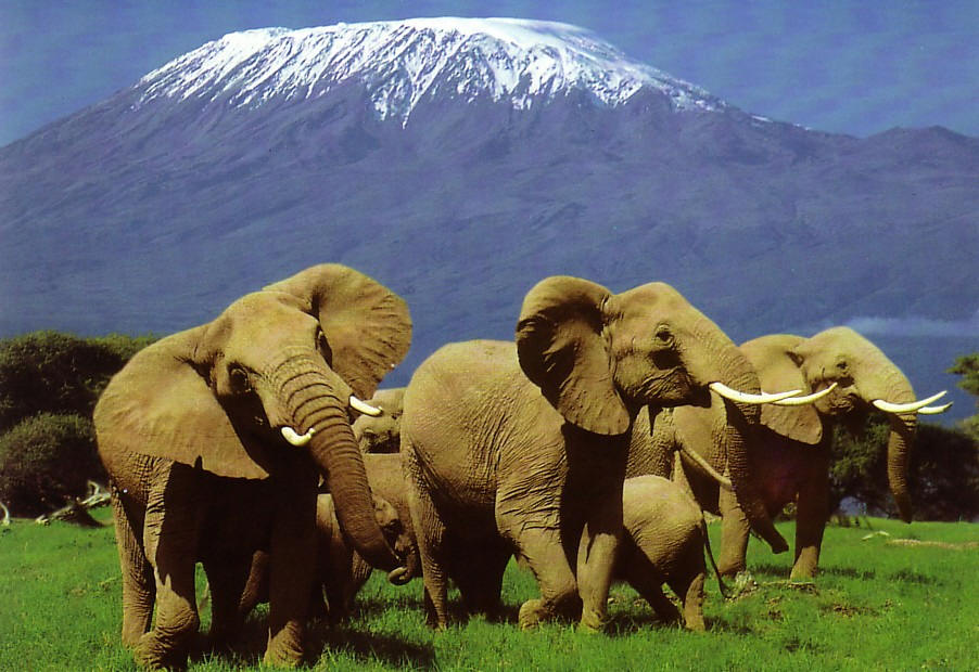 Day 2,3,4: AMBOSELI NATIONAL PARK - Crowned by Mount Kilimanjaro, Africa's highest peak, the Amboseli National Parks is one of Kenya's most popular parks. The name