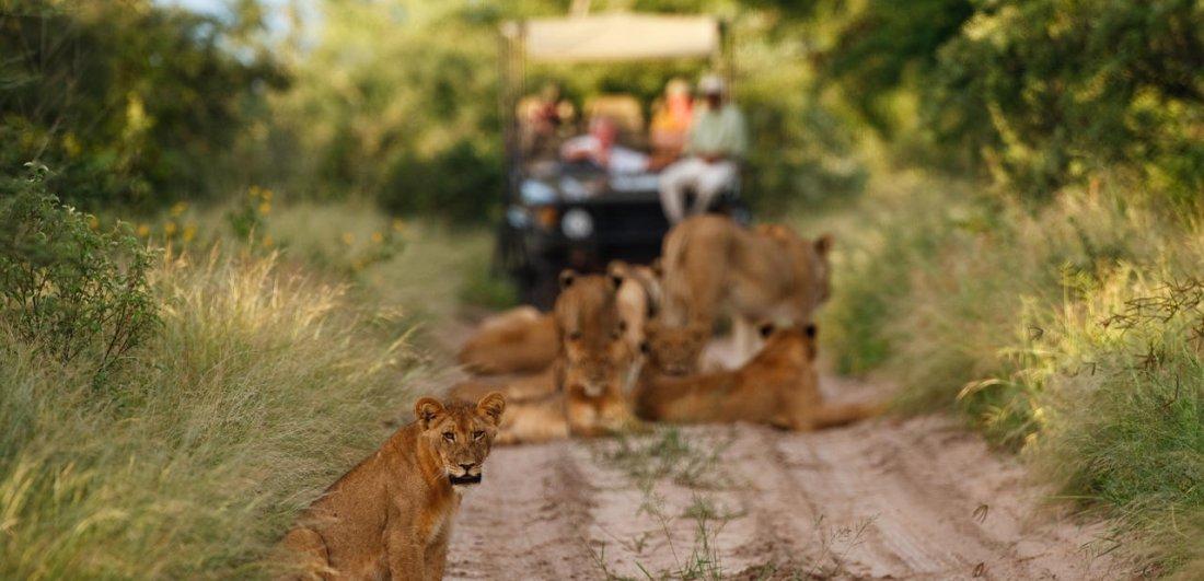 central kalahari reserve1.jpg