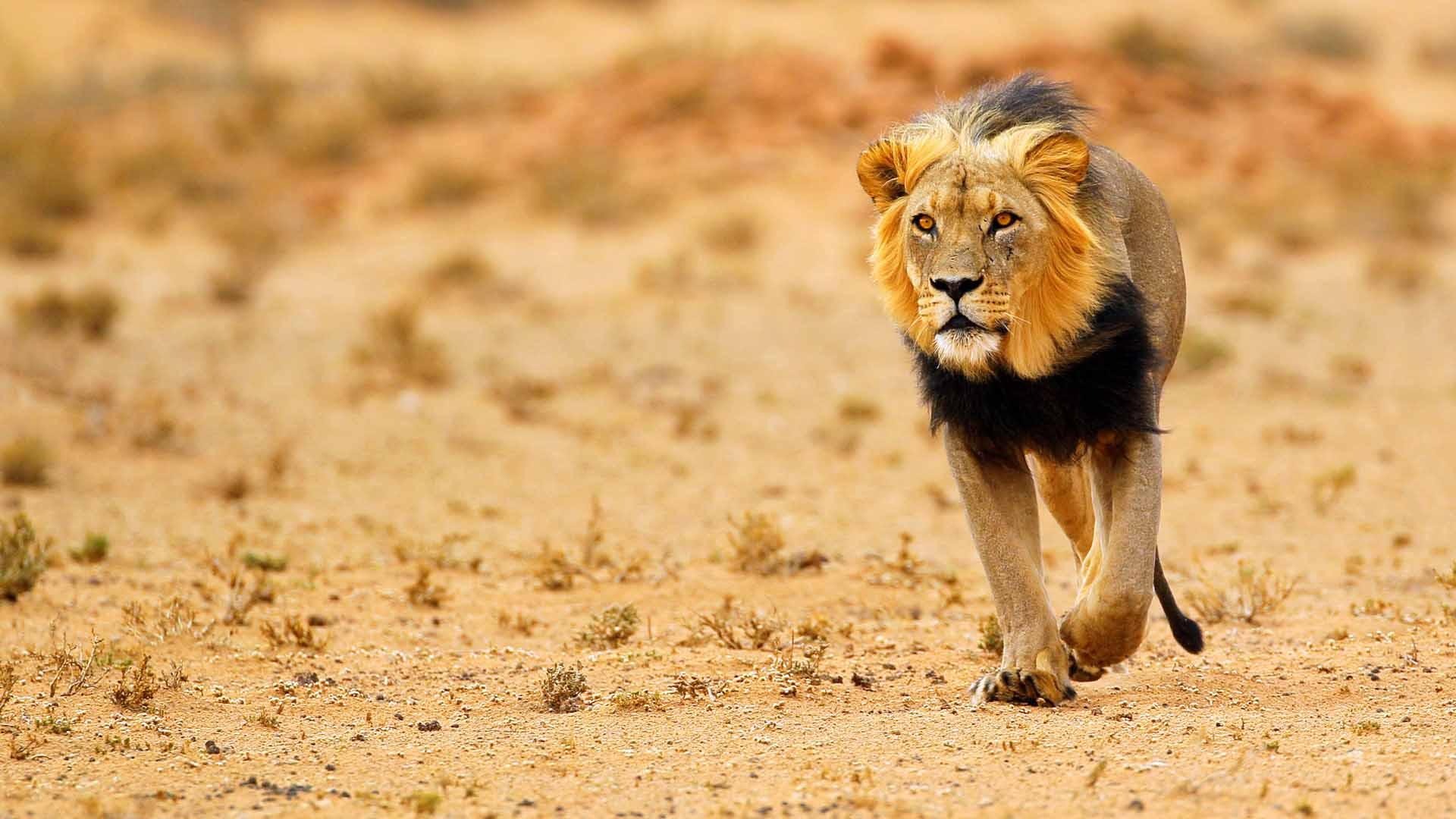 central kalahari reserve5.jpg