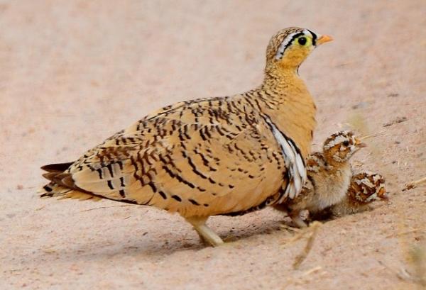 central kalahari reserve14.jpg