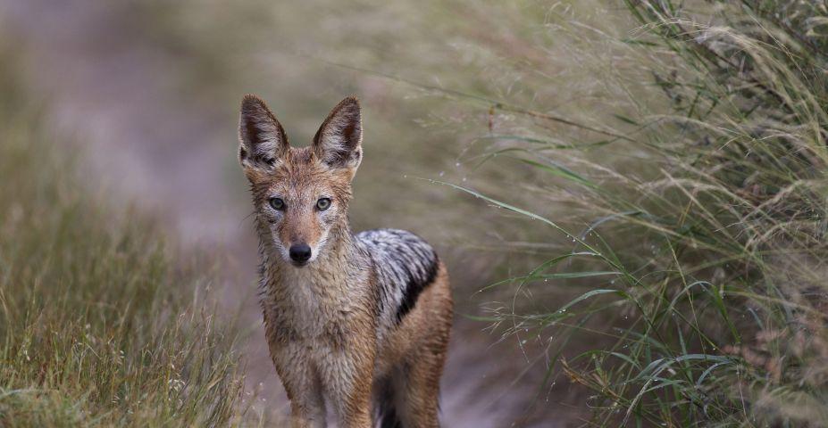 central kalahari reserve15.jpeg