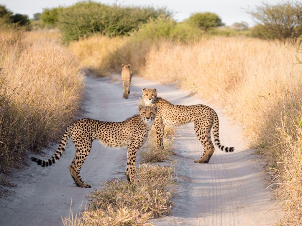 central kalahari reserve18.jpg