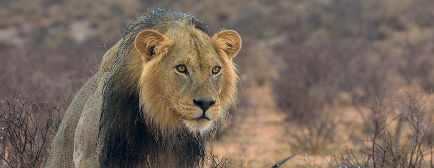 central kalahari reserve20.jpg