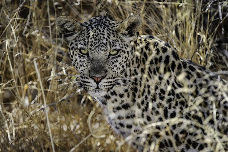 central kalahari reserve17.jpg