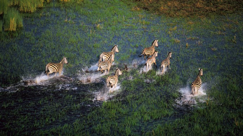 12 DAY BOTSWANA & SOUTH AFRICA DELUXE SAFARI ***** -