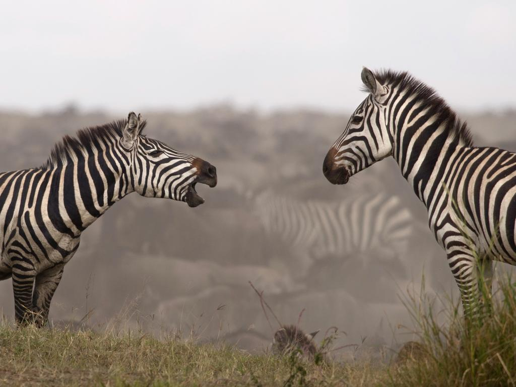 Northern Serengeti18.jpg