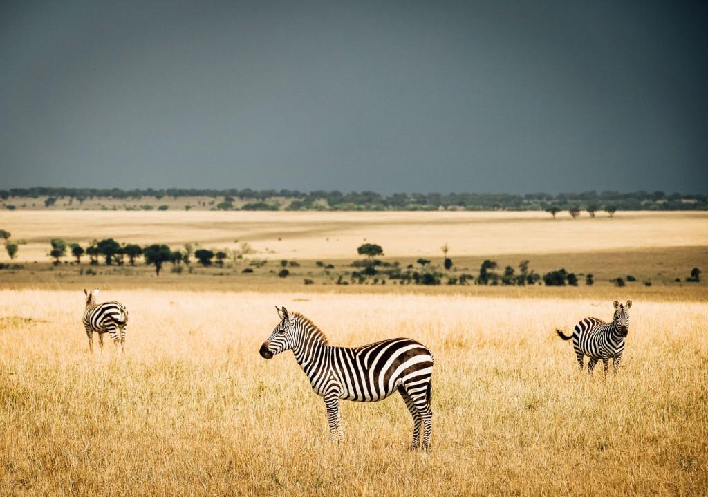 Northern Serengeti22.jpg