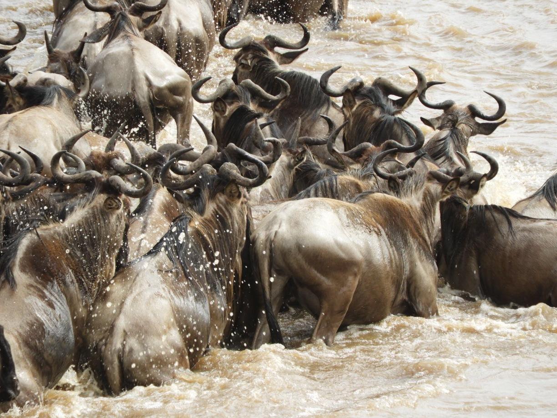 Northern Serengeti20.jpg