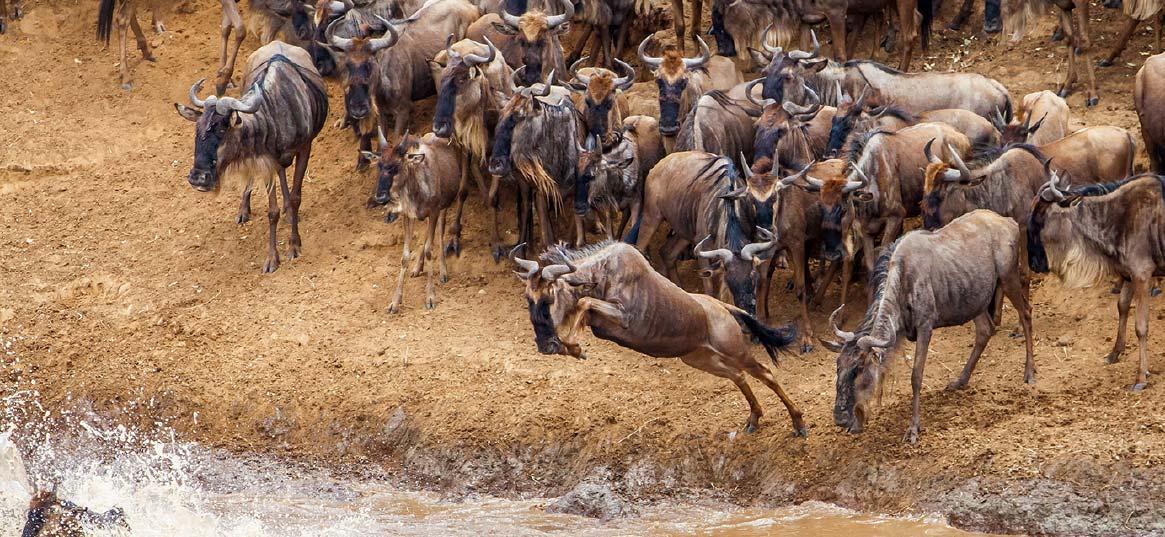 Northern Serengeti23.jpg