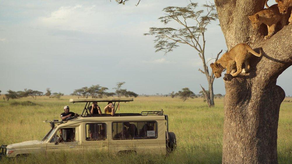Northern Serengeti24.jpg