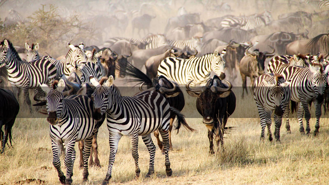 Tanzania Safari       THE GREAT MIGRATION      MORE INFO