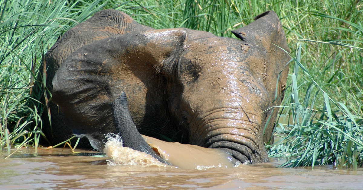 csm_Boat_safari_and_elephant_16c435beb7.jpg