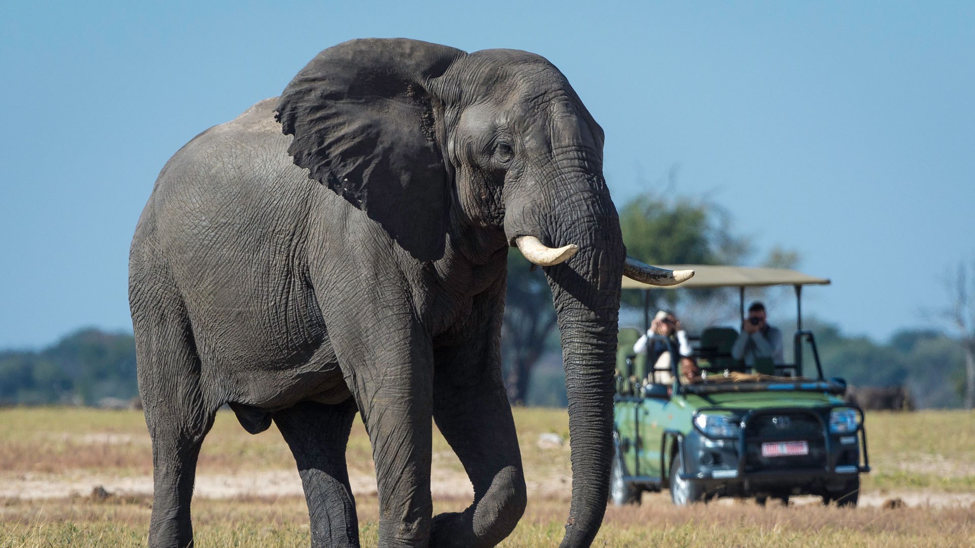 Elephant-Bull-On-Game-Drive-In-Hwange-National-Park.jpg