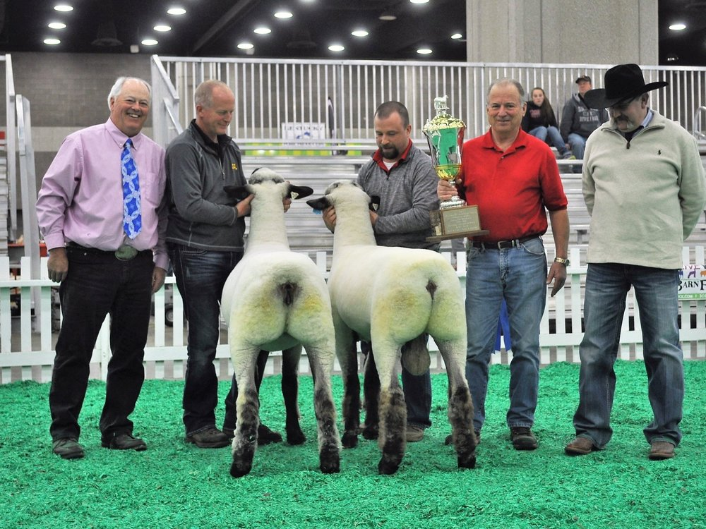 "First place mixed pair (Jim Cretcher revolving trophy) includes 2nd fall ewe lamb Bobendrier 17-157 and champion ram ""Rare Reputation""."