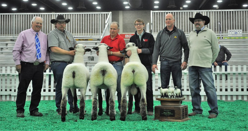 "First place young flock, (Roy Gilman memorial trophy) includes first pair of ewe lambs: 3rd place January ewe lamb Bobendrier 18-16 (sired by ""Stealth"") and 2nd place fall ewe lamb Bobendrier 17-157 (sired by ""Rare Rebel"") and National champion January ram lamb ""Rare Reputation"" (sired by ""Rare Rebel"")."