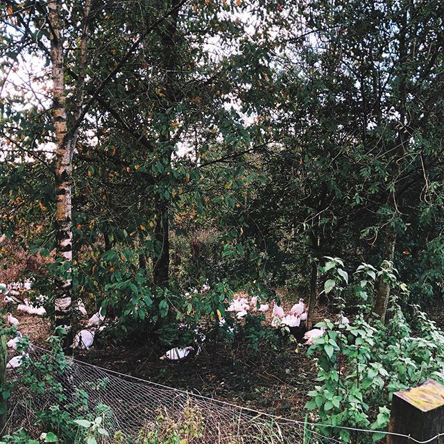 C H I L L I N G // just relaxing under the trees 🌳  It's ridiculous to think that in a few weeks they will have eaten their way through all of this undergrowth.