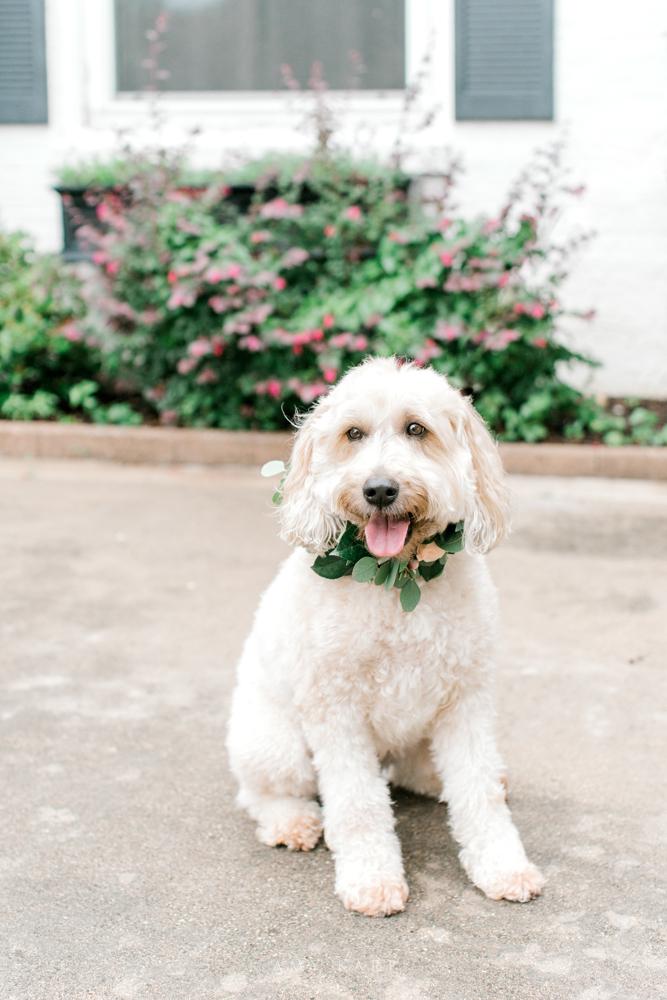 Wedding Puppy Floral Collar | Formal Vintage Wedding