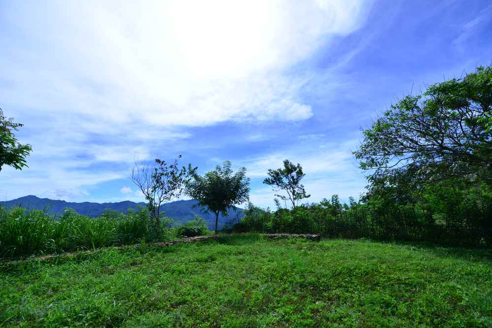 Amba Estate Tea Fields