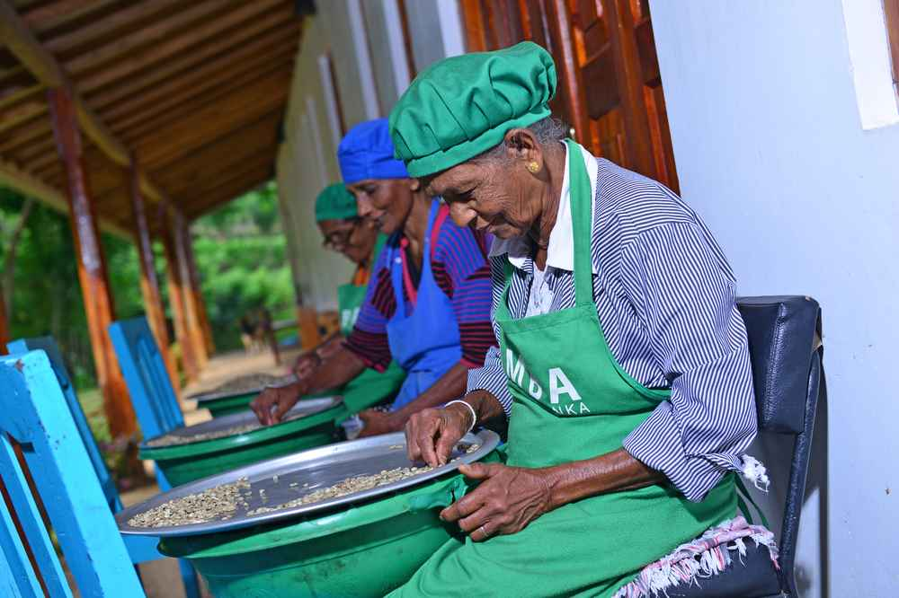 Amba Estate is a working organic tea farm.