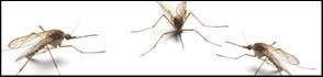services-mosquitos.jpg
